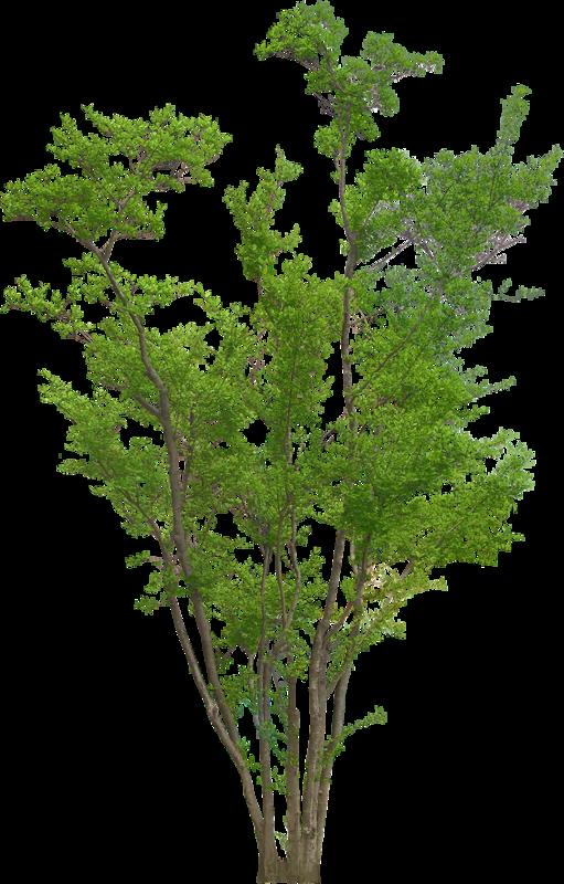 Gif Arbre gif arbre