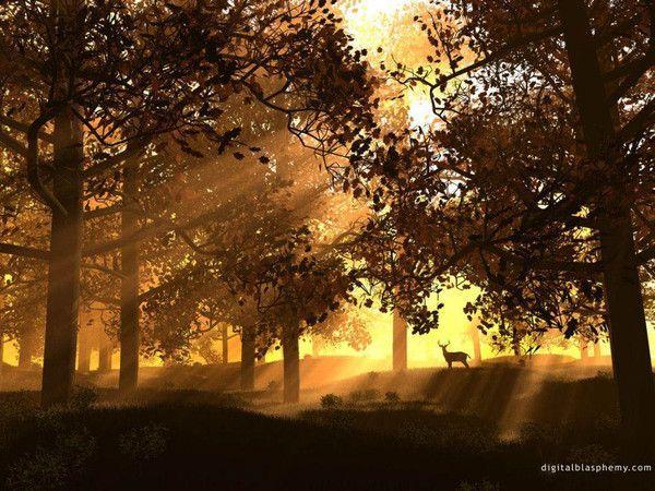 fond d'écran forêt
